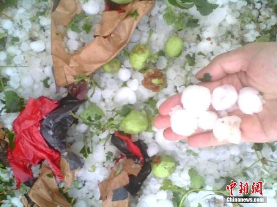 甘肃静宁遭冰雹袭击 苹果树被打得只剩枝条