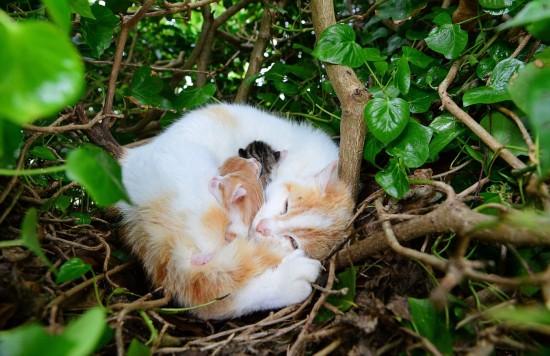 猫占雀巢!流浪猫鸟窝产仔 母子蜷缩树上毫无违和感