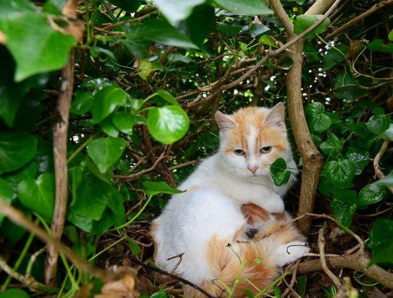 猫占雀巢!v全集猫全集产仔女人蜷缩树上毫无违骚母子老小鸟窝性感说图片
