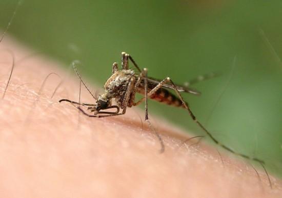 夏天最招蚊子的7种人 你在其中吗?