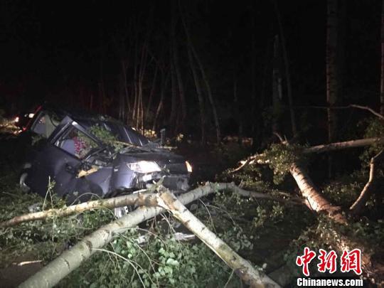 暴风雨致哈尔滨数十颗树折断一男子身亡