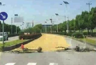 上海郊区马路晒麦子行车如溜冰 伤人毁车惹众怒