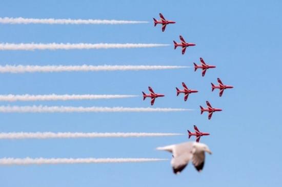 英摄影师抓拍到海鸥与飞行表演队融为一体画面
