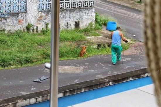 清洁工撞伤流浪狗 将其扔进垃圾车压死