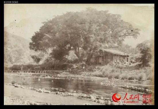 摄于1870年的永泰乡村。图为洋人拍摄的塘前大榕树。目前该村子仍有数棵三百年以上古榕。