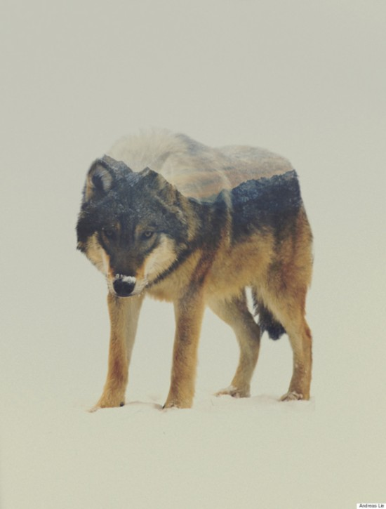 挪威艺术家利用PS技术使动物与自然浑为一体【13】