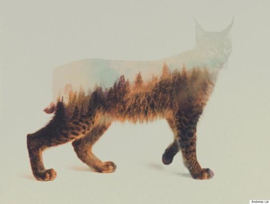 挪威艺术家利用PS技术使动物与自然浑为一体【8】