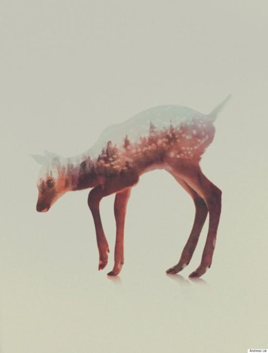 挪威艺术家利用PS技术使动物与自然浑为一体【5】
