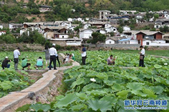 (晚报)(1)农业观光游造福彝寨凤窝村