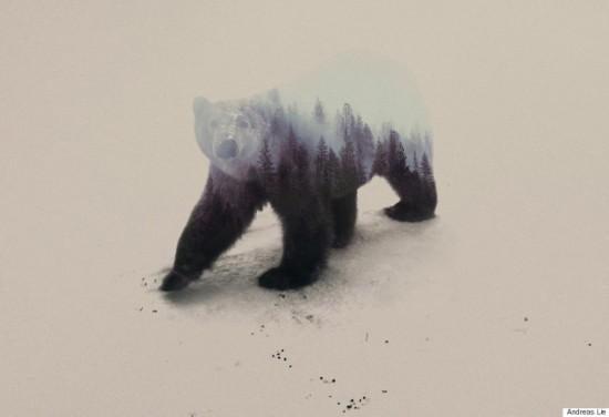 挪威艺术家利用PS技术使动物与自然浑为一体【10】