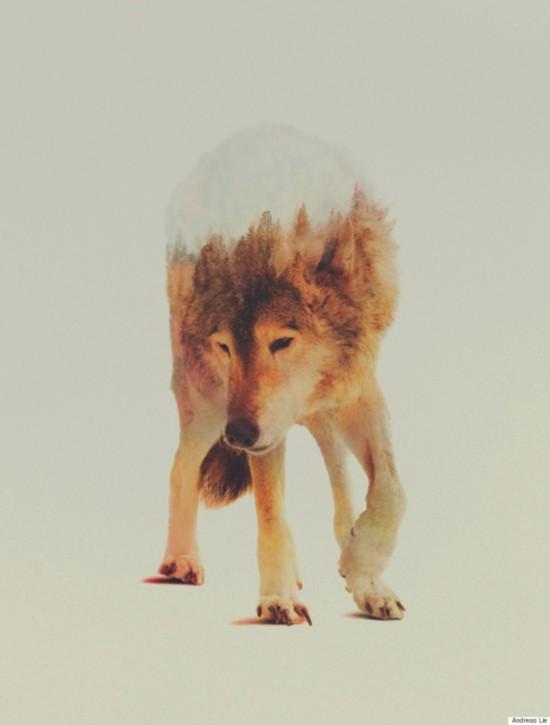 挪威艺术家利用PS技术使动物与自然浑为一体【12】