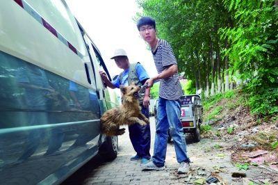 志願者小顧(右)將救出的狗轉移到安置地