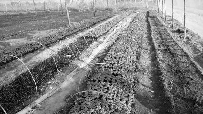 放弃万元月薪 4小伙回东方开公司卖无公害蔬菜