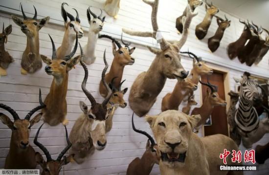 栩栩如生的动物标本就被挂在展览馆的入口处.