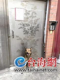 咬死毒蛇后丧命那些感动全台湾的忠犬(图)