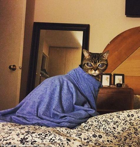 猫咪患怪病眼睛不断长大酷似外星人(图)