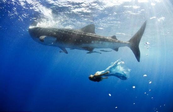 澳摄影师海底拍摄美女与鲨鱼同游合照
