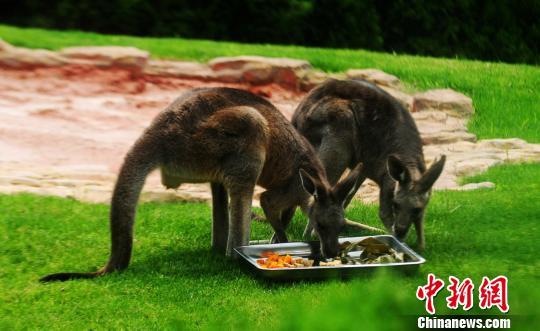 """扬州动物园""""粽""""飘香动物品尝""""美味香粽""""迎端午"""