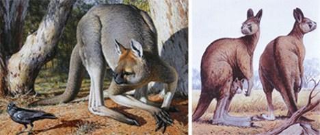 已灭绝动物盘点 14种远古巨兽大复活 组图