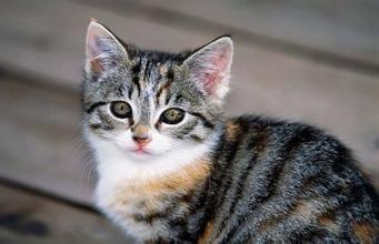 """猫咪藏身货柜""""偷渡""""数千公里舔水珠熬过三星期"""