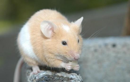 老鼠磨牙引发爆炸 盘点全球各类奇葩动物:奶牛放屁震飞牛棚