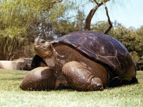 美国150岁巨龟被执行安乐死有90个后代(图)