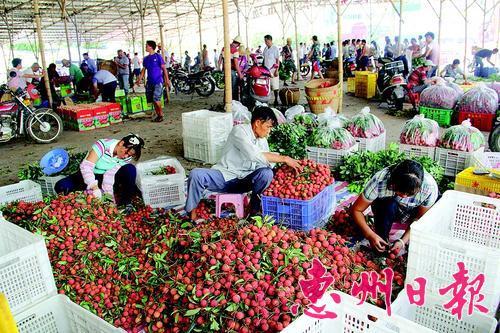 镇隆荔枝市场,果农将采摘的新鲜荔枝包装出售。