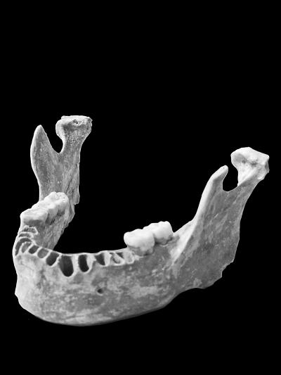 """古DNA研究揭示现代人类祖先曾与尼安德特人""""混血"""""""
