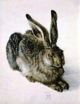 阿尔布雷特・丢勒,《野兔》(完成于1502年)