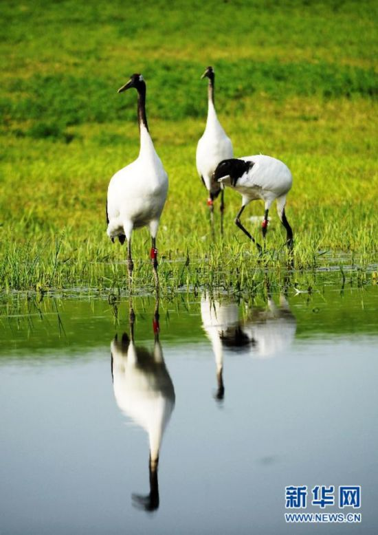(美丽中国)(3)鹤舞湿地生态美