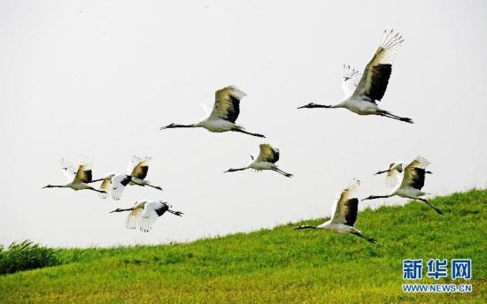 (美丽中国)(1)鹤舞湿地生态美