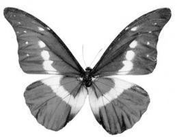 收藏了2000多只蝴蝶