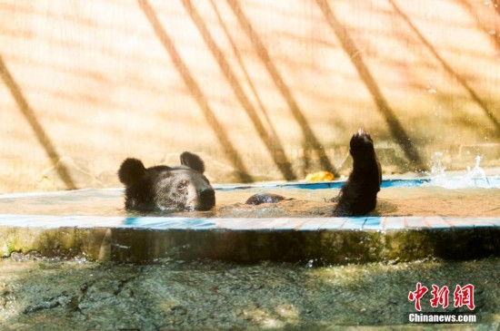 持续高温 广西柳州制定各种妙招为动物消暑
