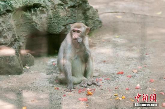 持续高温 广西柳州制定各种妙招为动物消暑--福建频道