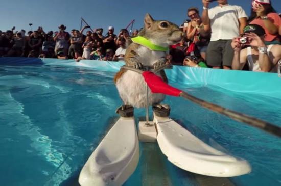 小松鼠现身极限运动大赛 滑水神技抢尽风头
