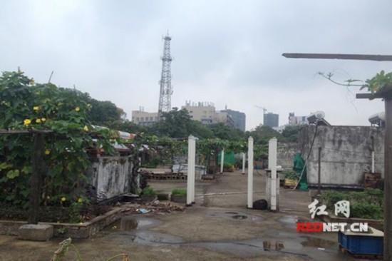 """楼顶已被瓜分成几片""""种植基地"""""""
