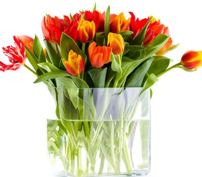 这4类花草千万别养在室内 会毁掉你的健康!