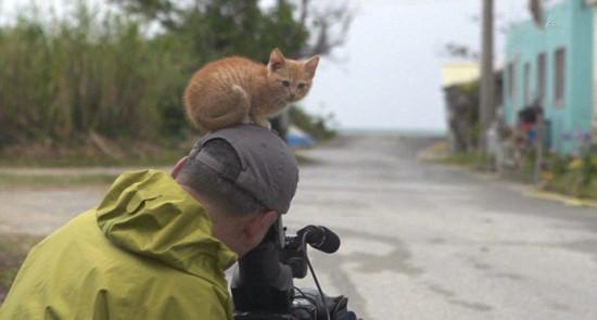日本好奇萌猫与摄影师温暖互动惹人怜爱【3】