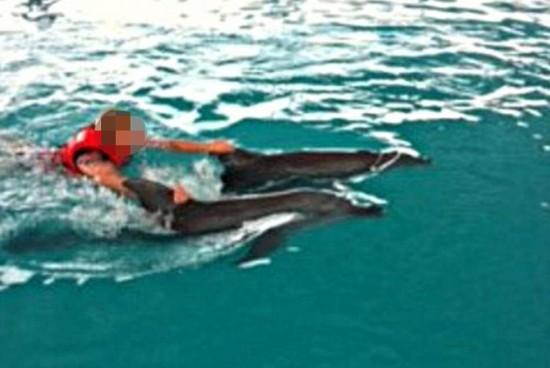 印尼巴厘岛一酒店泳池氯超标致海豚几乎失明【7】