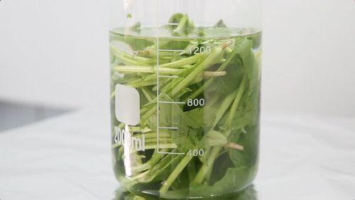 菠菜富含铁元素补血效果好?含铁量不如芹菜香菜