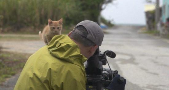 日本好奇萌猫与摄影师温暖互动惹人怜爱