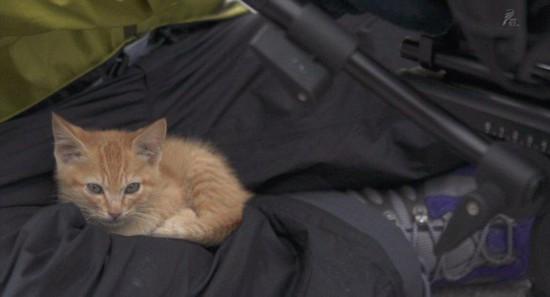 日本好奇萌猫与摄影师温暖互动惹人怜爱【4】