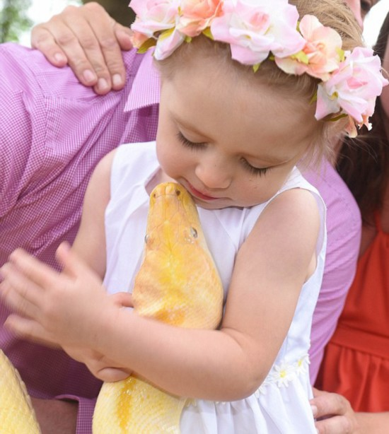 英2岁女童与近5米长缅甸蟒拥抱热吻【8】