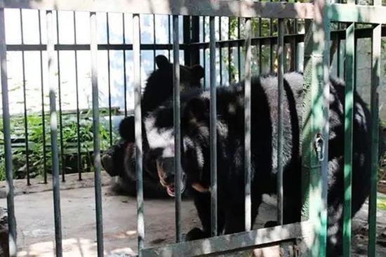 狗狗黑熊傻傻分不清