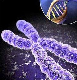 研究:链球菌新型变异体扩全球死亡率达25%