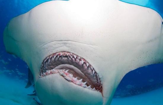 """美科学家制服6米长""""吃人鲨""""做研究【4】"""