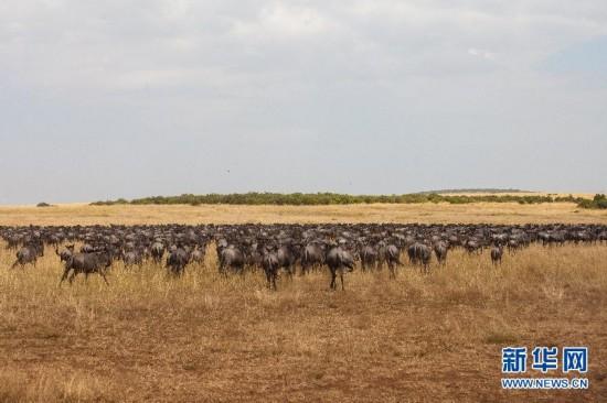 """(国际)(4)肯尼亚壮观的""""天国之渡"""""""