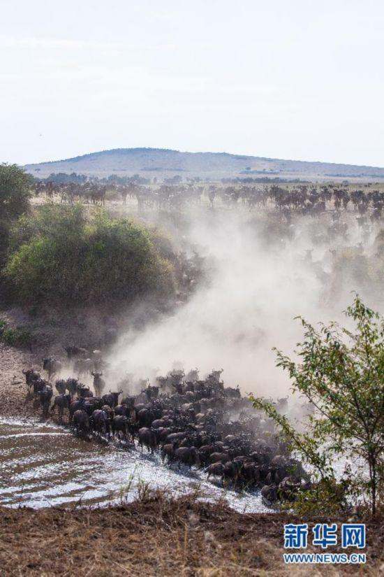 """(国际)(2)肯尼亚壮观的""""天国之渡"""""""