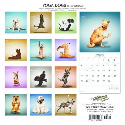 可爱又有趣:猫猫狗狗也瑜伽