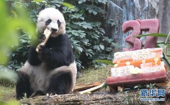 (社会)(2)香港:大熊猫佳佳刷新最长寿圈养大熊猫世界纪录